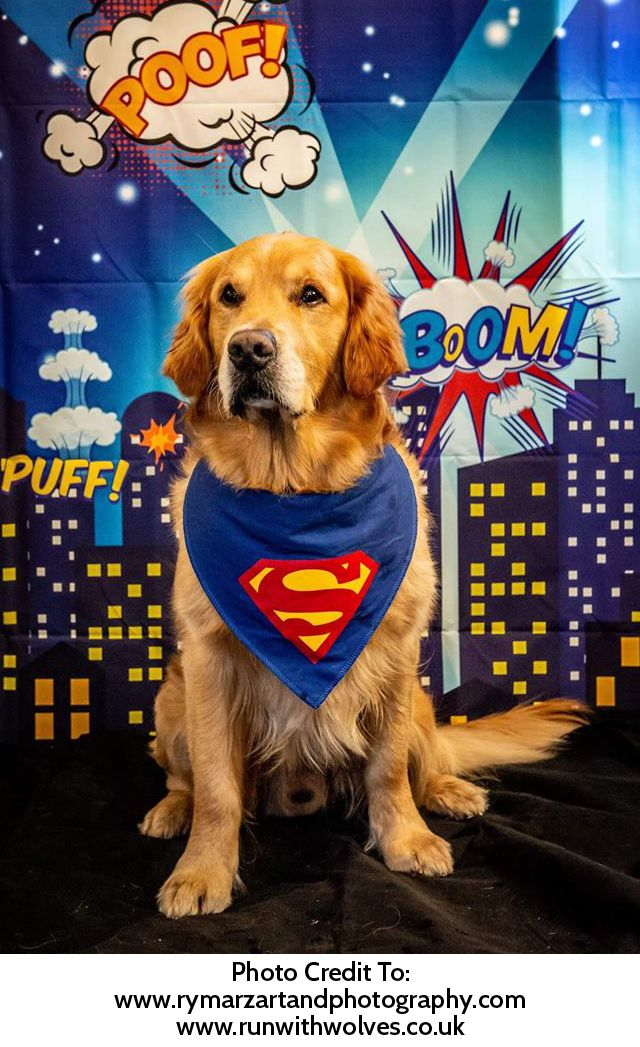 Superdog Superman Blue Dog Bandana